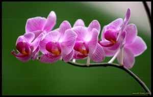Как я узнаю, что моя орхидея получает достаточно света?