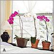 Освещение для орхидей