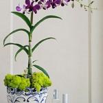 Уход за орхидеей Dendrobium