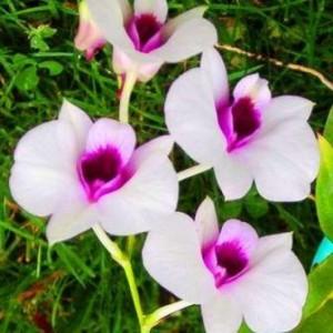Видео уроки по уходу за орхидеями