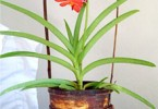 Уход за орхидеей VANDA
