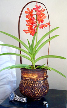 vanda l Уход за орхидеей VANDA