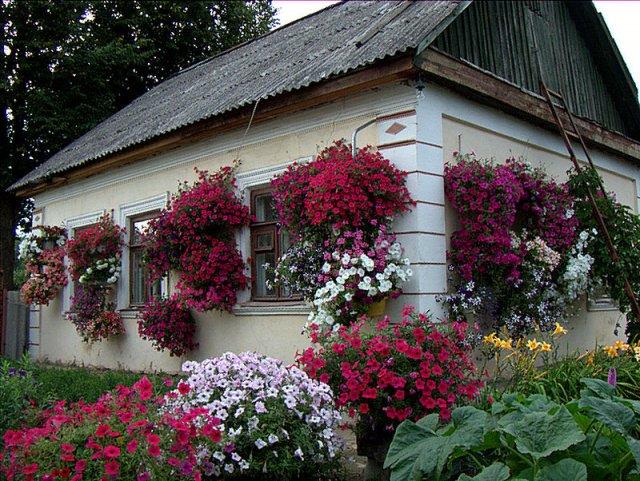 Как вырастить петунию: flowercare.ru/sovety-po-uxodu-i-vyrashhivaniyu/petunya.html