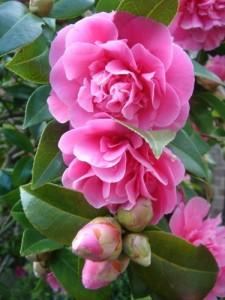 643091_flower_24972