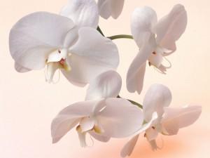 Орхидеи уход и размножение