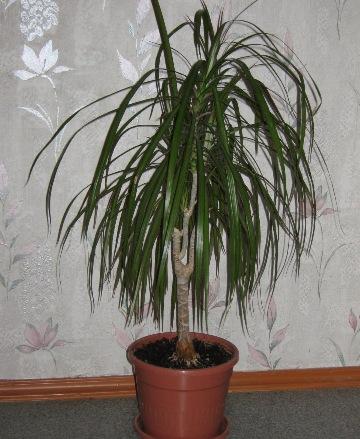 Плант микс уход за цветком в домашних условиях полив