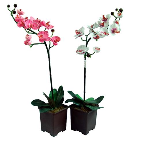 Orhideja 1 300x296 орхидея