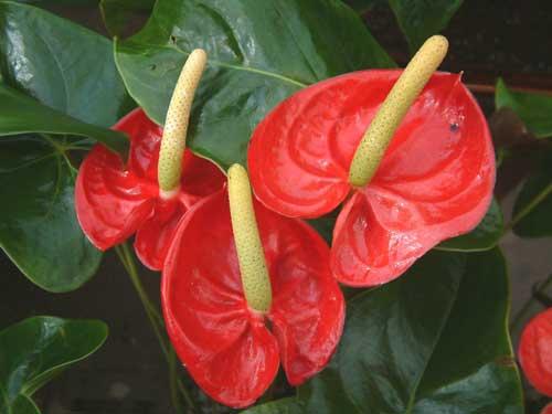 Как пересадить домашние цветы