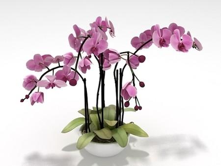 Orchid 300x225 орхидея