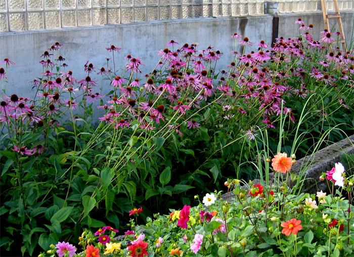 Садовые цветы многолетники источник