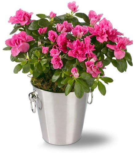 Цветы с розовыми цветами 100