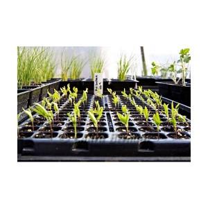 Выращивание помидоров из семян