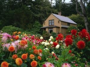 Цветы в саду и дома