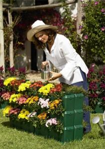 Цветы дома и в саду