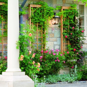 Продажа садовых растений