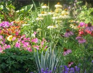 Цветы многолетние в саду
