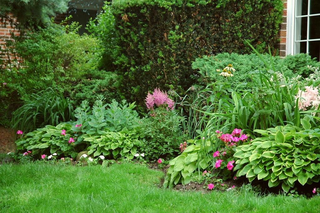 Семена растений для сада i