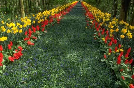 Неприхотливые цветы для сада