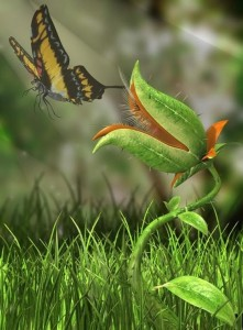 Необычные растения вокруг нас.