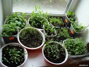 Сеем семена на рассаду
