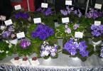 Выставка цветов в Санкт-Петербурге
