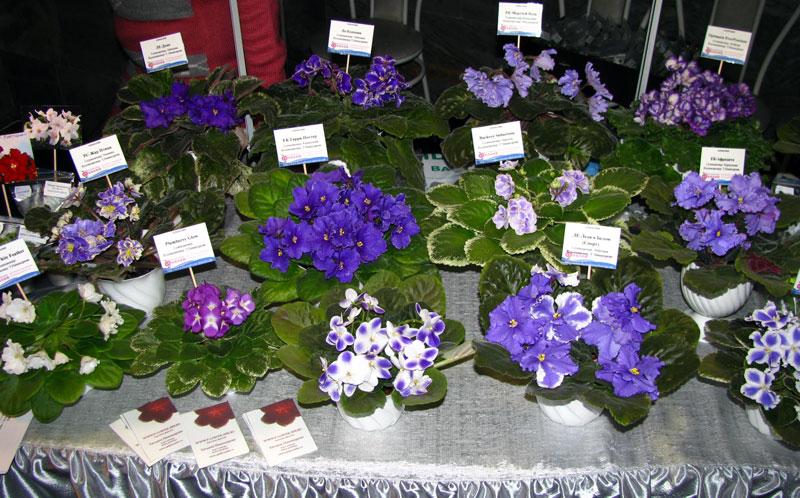 Выставки в санкт петербурге цветов