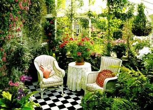 Выбираем неприхотливый комнатный цветок