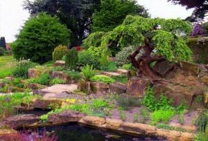 Выбираем низкорослые хвойные растения для сада