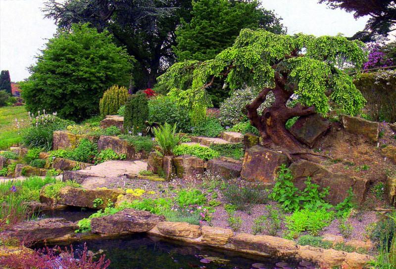 Хвойные растения в саду