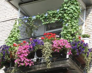 300x240 какие цветы посадить на балконе