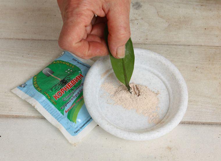 Замиокулькас пошаговое размножение листом