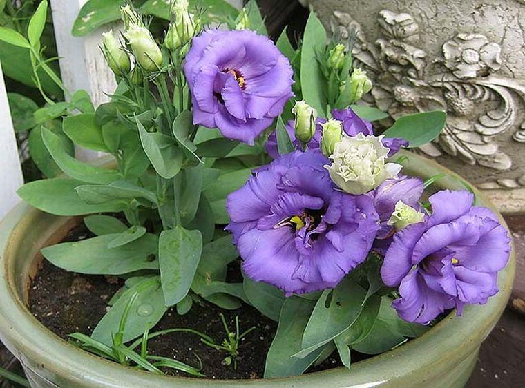 Цветочная эротика - Женщина цветок. Единая Служба Объявлений
