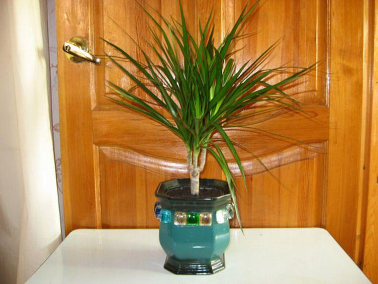 благоприятный день для пересадки комнатных растений в сентябре